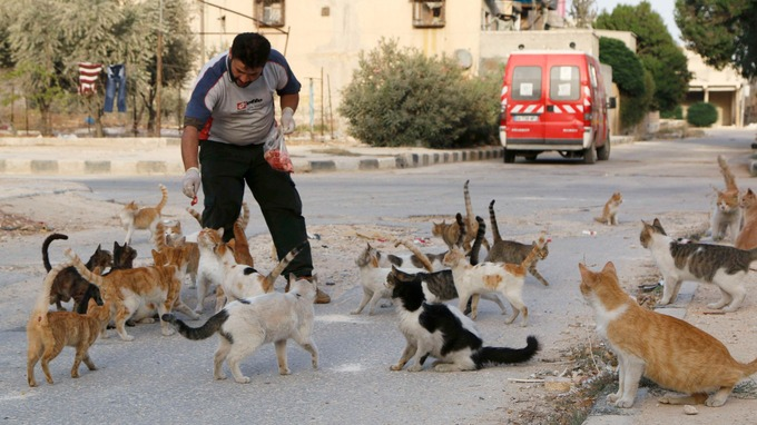 Ambulance Driver Feeds An Army of Cats to Keep Them Alive